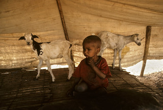 Mali Child with Goats | by United Nations Photo