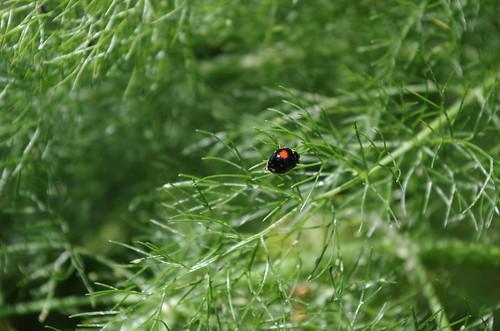 Mon petit jardin my little garden meine kleine garten flickr - My little jardin ...