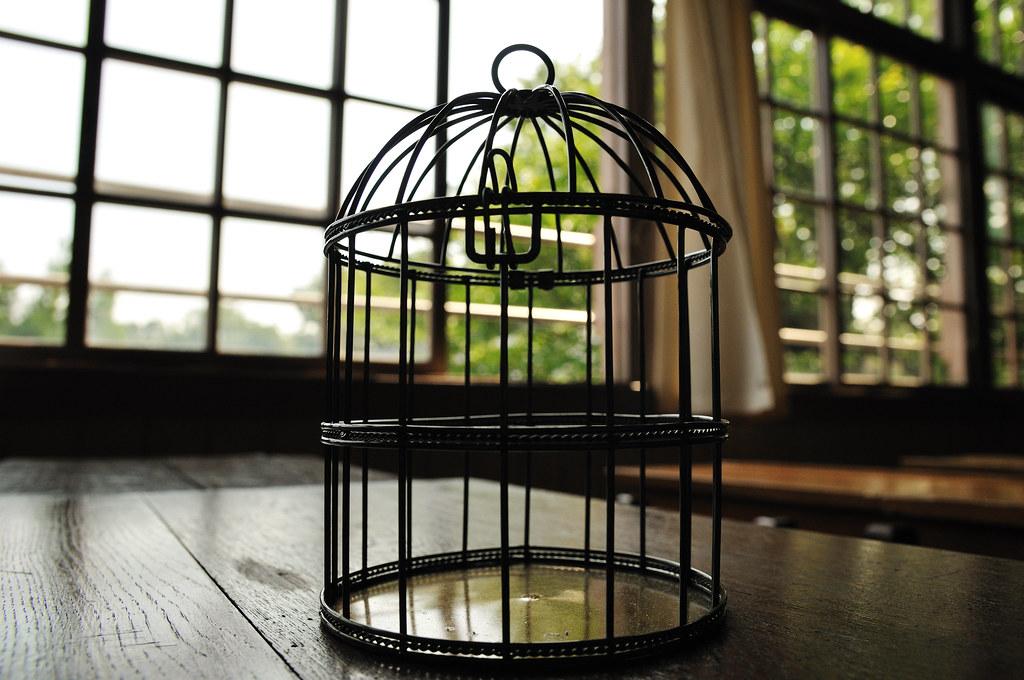 Cage  Ef Bf Bd Oiseau Exterieure Decorative