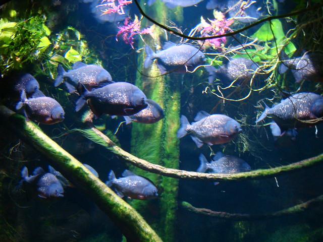 Image Result For Riverhead Aquarium