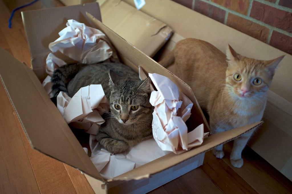 Worlds Best Cat Llitter