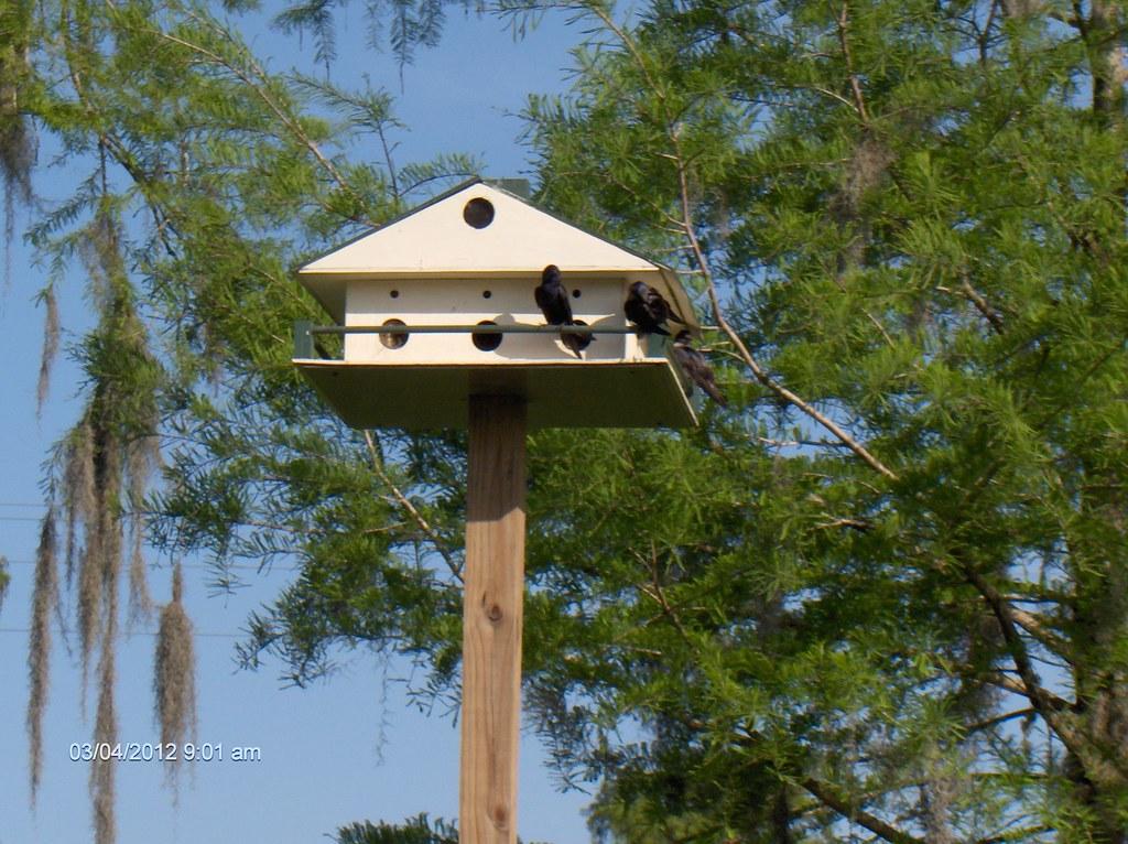 Bayou Vista GC, Louisiana | Bayou Vista GC, Louisiana | Flickr