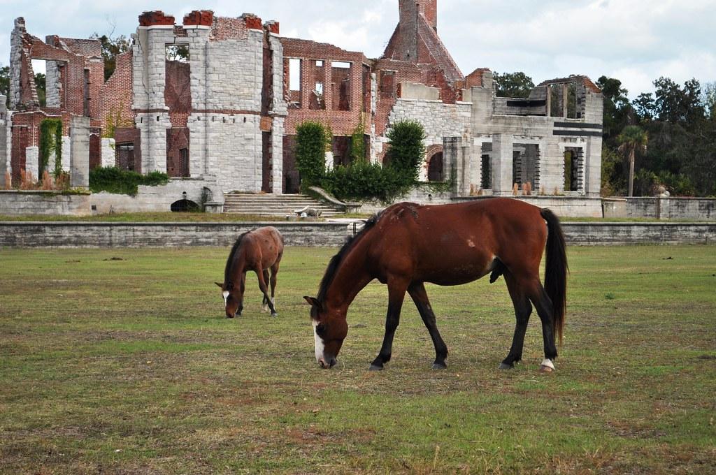 Wild Horses at Dungeness, Cumberland Island National Seash ...