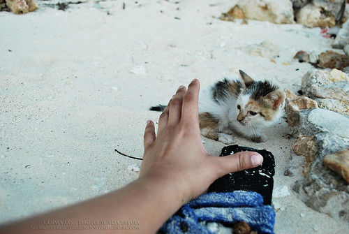Kitten in Ave Maria Islet Beach | by adaphobic