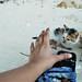 Kitten in Ave Maria Islet Beach