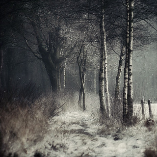 Winter Tale | by Oer-Wout