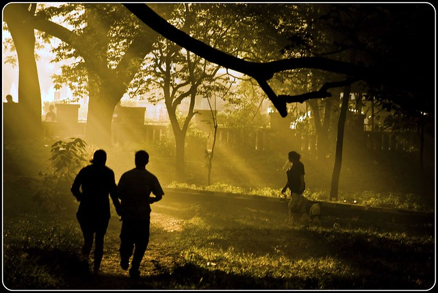 Early morning - cubbon park