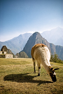 Inhabitant of Machu Picchu | by Lor.enzo