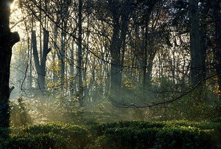 The Enchanted Glade | by SteveJM2009