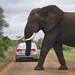 Africa Safari 007