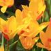 Baddesley Clinton Flowers