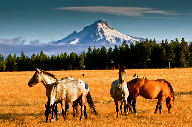 island mountain horse wallpaper - photo #11