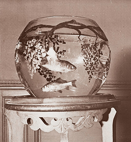 French Stereoview Animated Of Fish Bowl C 1920s Flickr