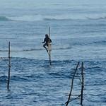 Stilt Fisher Of Sri Lanka