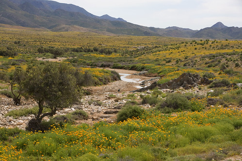 The Richtersveld Community Conservancy | by World Bank Photo Collection