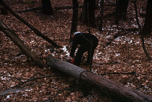 Clearing the logs, December 26, 2010 - my final Kodachrome shots | by chuckthewriter