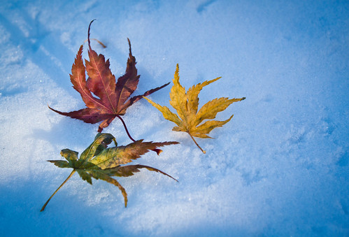 Fall meets winter | by abhinaba