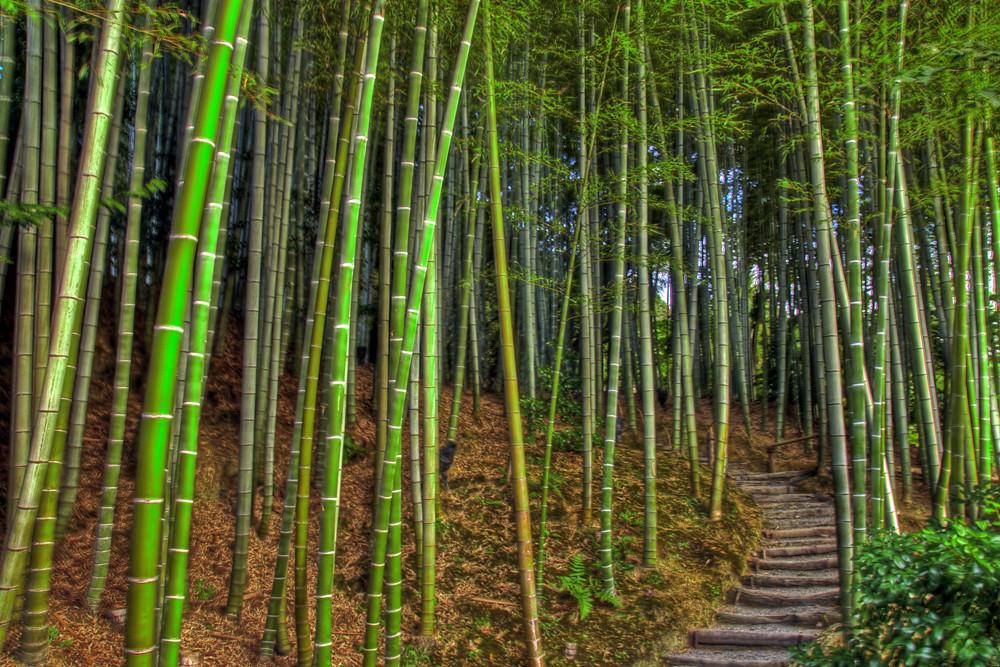 Bamboo Garden Bamboo Garden K Dai Ji Temple Kyoto