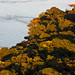 El monte higrófilo ribereño, con el Ivirá-Pitá en flor!