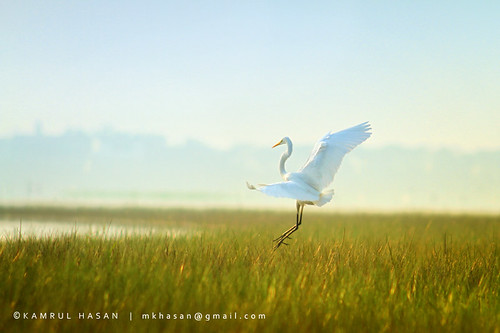 Soul Dance | by Kamrul - Hasan