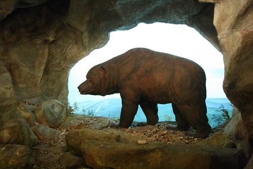 Höhlenbär   Flickr - Photo Sharing!