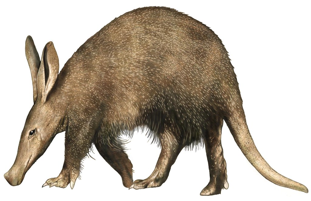 Aardvark Learn More About The Aardvark With The