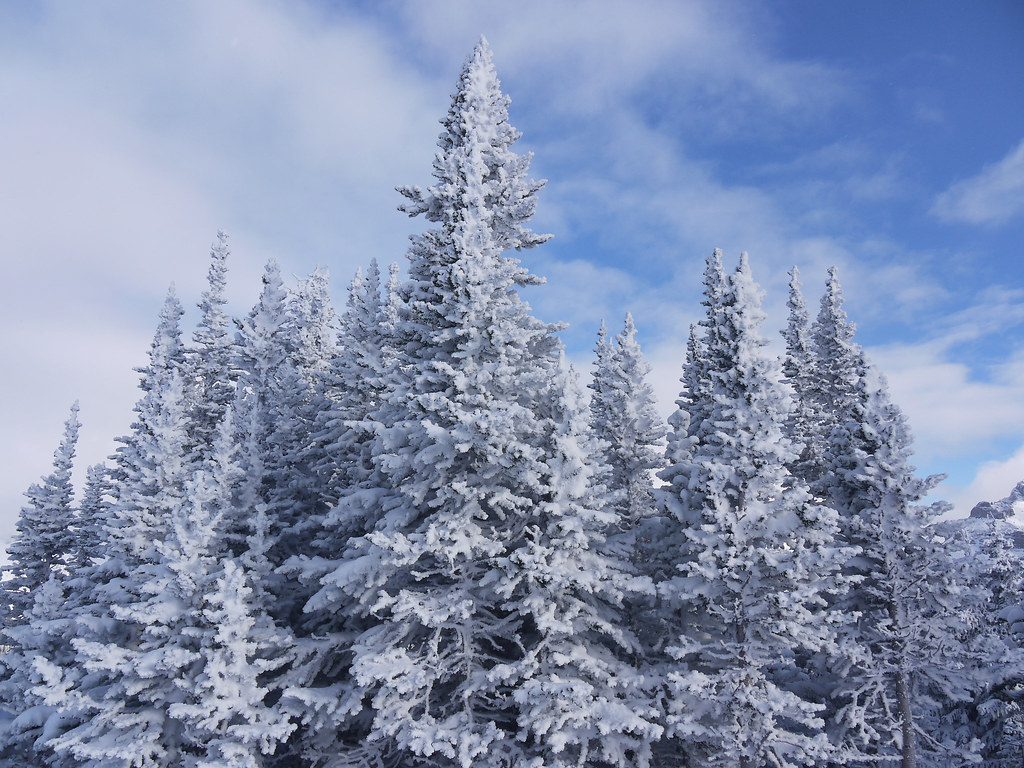 Narnia Trees | I love seeing trees as snowy as this ...