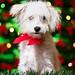 Merry Woofmas!!!