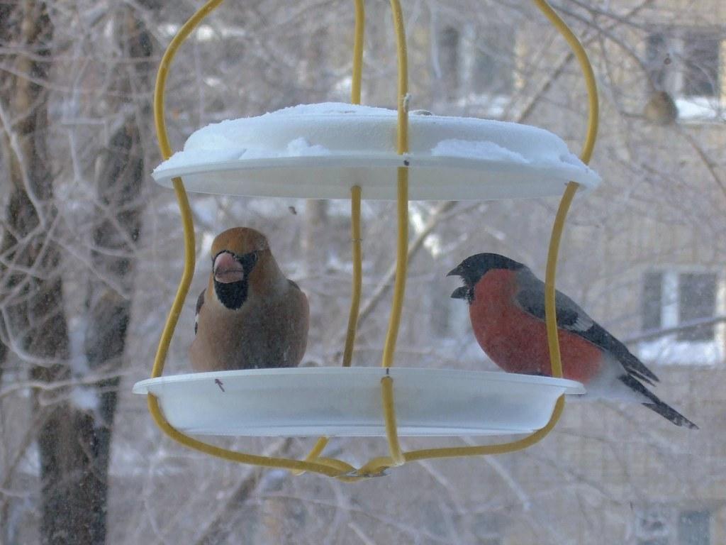 Зимние кормушки для птиц своими руками