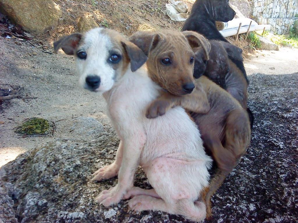 Free Dog Adoption Penang