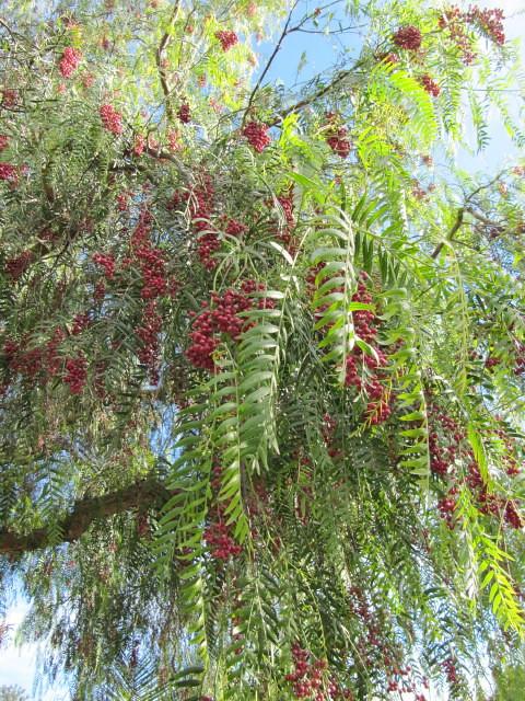 Evergreen Tree Leaves