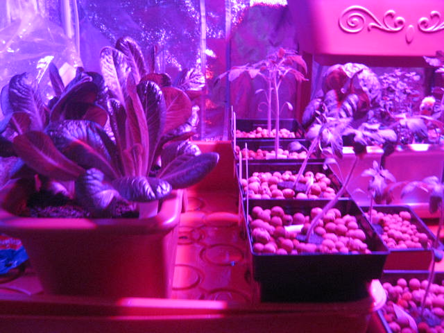 Led Grow Lights And Grow Tents Rooms Sydney Area