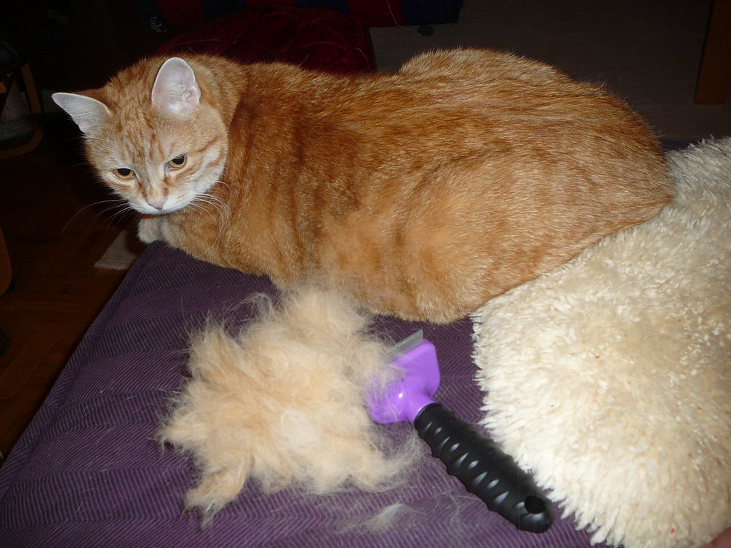 Video Of Furminator For Dogs