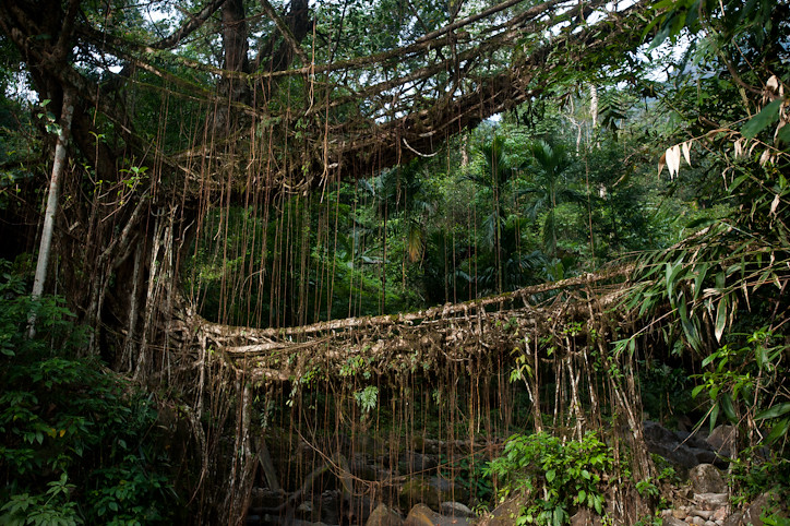 The Double Decker Umshiang Living Root Bridge In Northea