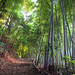 THE BAMBOO PATH TO SCHOOL