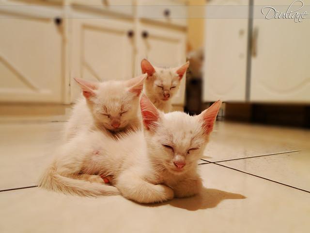 sleep sweet babys