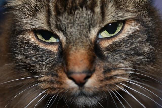 cat mites treatment