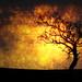 Wicklow Tree