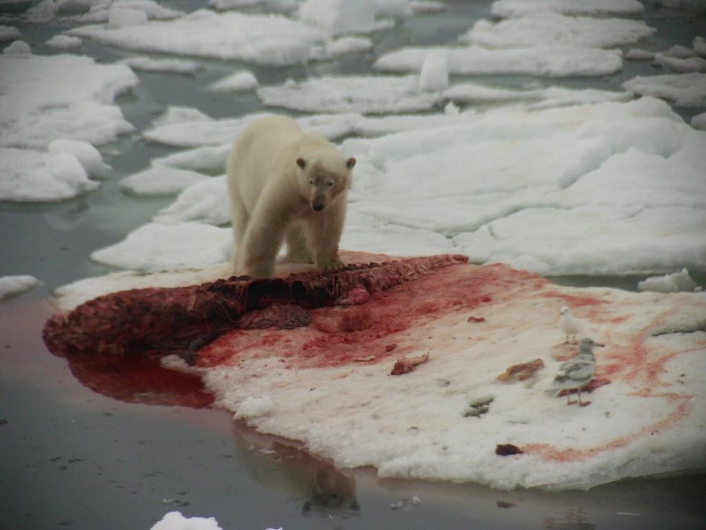 Food To Eat In Antarctica