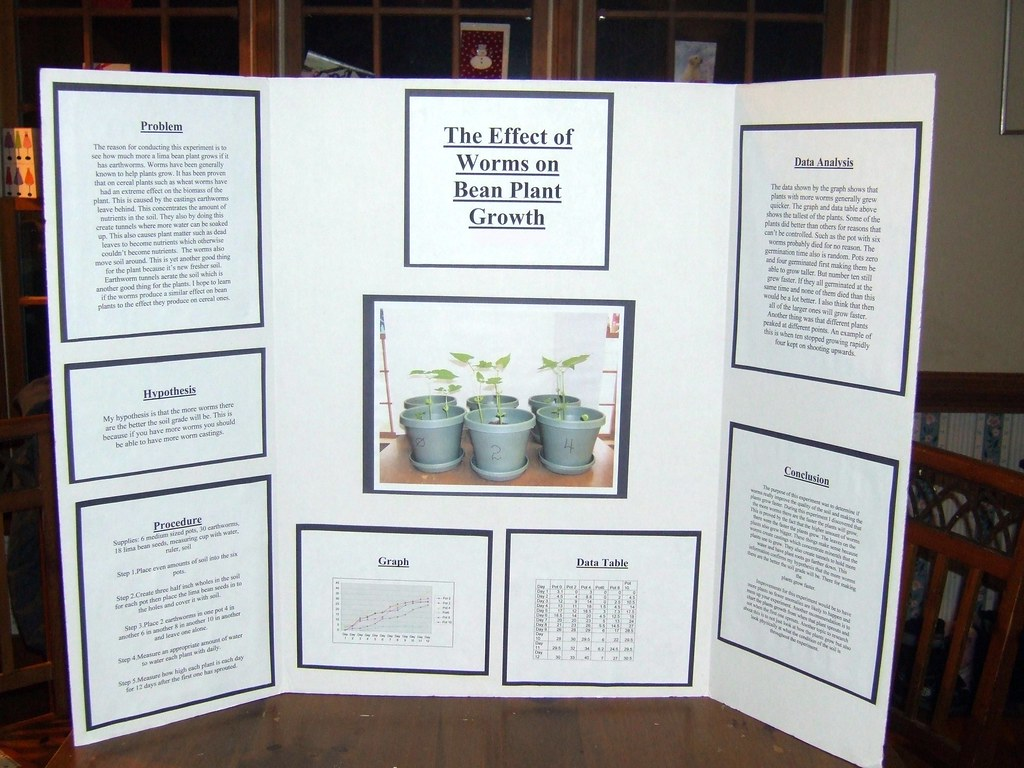 Science Fair Project Final Report