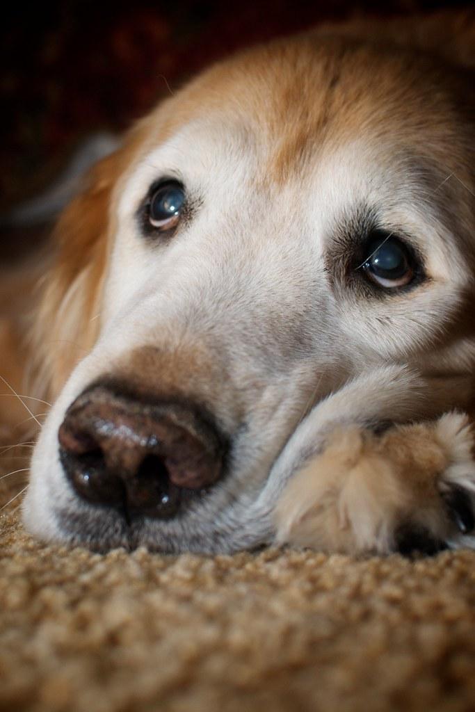 My Dog Senior Tender Lamb Big W