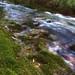 The Elegant Creek