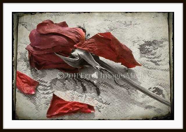 Dieu Ma Joie Une Rose Effeuillée Poésie De Thérèse De