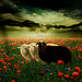 ~ the black sheep ~