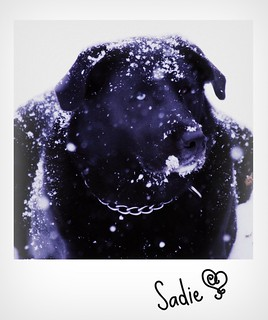snow dog | by Copperdog ~ Diane