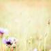 ~ floral softness ~