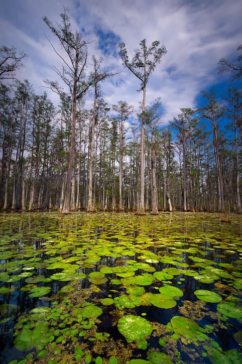 Cypress Garden Springtime Cypress Gardens South Carolina U Flickr