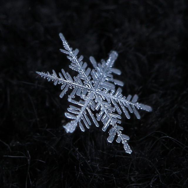 Real snowflake -- So Cold | Flickr - Photo Sharing!