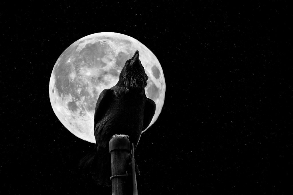 The Crow Amp The Moon Explored Www