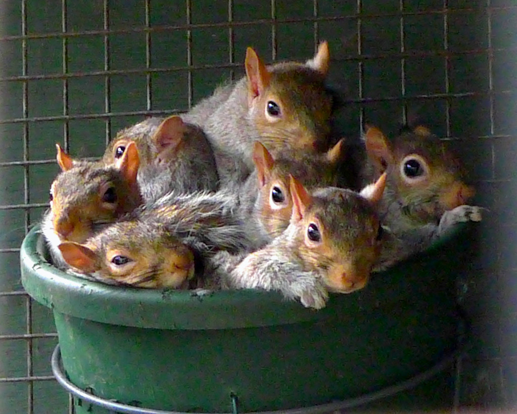 Group Of Squirrels 2